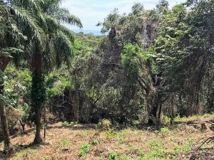 Roatan Acreage West Bay