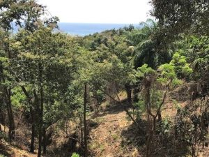 Roatan Acreage West Bay